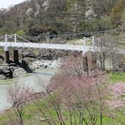 旭川の景勝地のひとつ,神居古潭を彩る桜