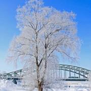 木々も樹氷となる極寒の旭川