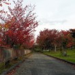 紅葉する旭山公園①