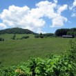 牧場風景①