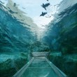 ぺんぎん館の水中トンネルでは,水中をロケットのように自由自在に泳ぎ回る姿が見られます