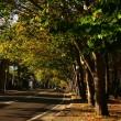 秋のプラタナス並木
