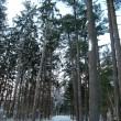 作品における代表的なスポット「外国樹種見本林」