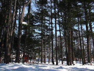 外国樹種見本林・冬