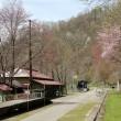 神居古潭・桜の風景(旧駅舎付近)