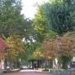 7条緑道・秋の風景