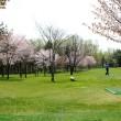 公園内のパークゴルフ場。桜を見ながらプレーを楽しむ人々
