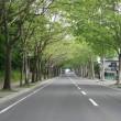 プラタナス並木の風景・夏①