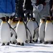 冬期間しか見られない「ペンギンの散歩」