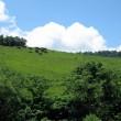 牧場風景②
